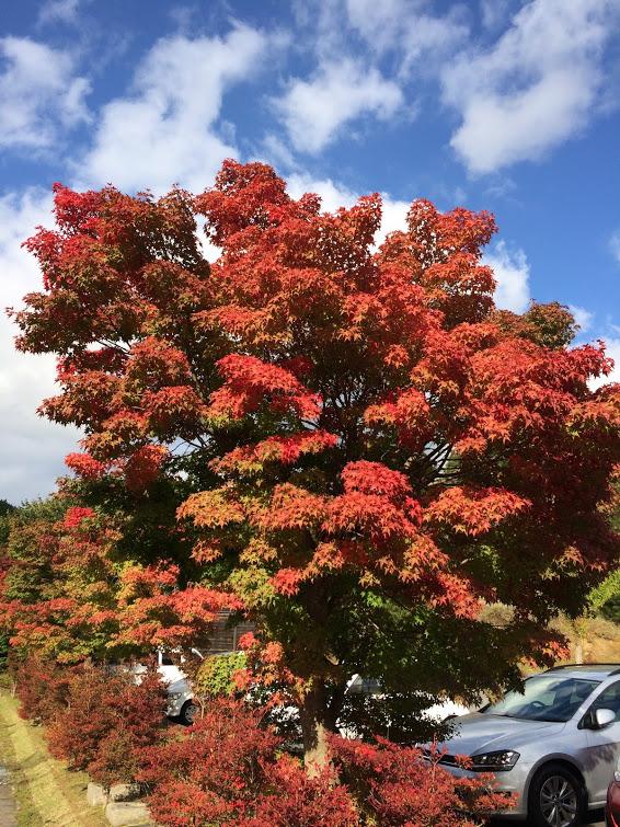ちらほら紅葉している木がありました。